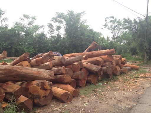 vật liệu gỗ mít