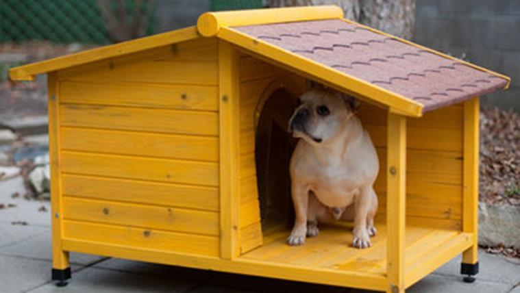 nhà gỗ cho chó
