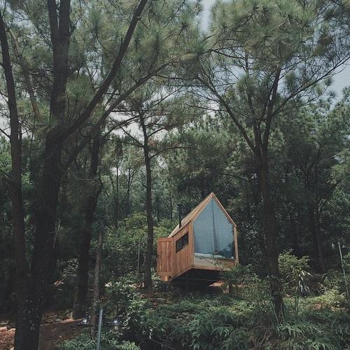 khám phá nhà gỗ rừng thông